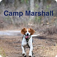 Adopt A Pet :: Marshall - Mount Laurel, NJ