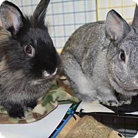 Adopt A Pet :: Heidi and Toph - Conshohocken, PA