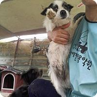 Adopt A Pet :: Jewel - Oakton, VA
