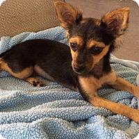 Adopt A Pet :: NELLY - Odessa, FL