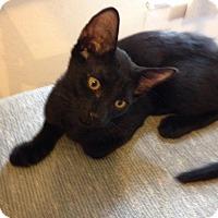 Adopt A Pet :: Aslan - St. Cloud, FL
