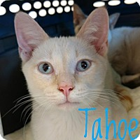 Adopt A Pet :: Tahoe - Knoxville, TN