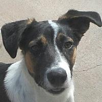 Adopt A Pet :: Baby Rollick - Oakley, CA