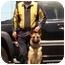 Photo 3 - German Shepherd Dog Mix Dog for adoption in Los Angeles, California - Jerry Lee von Kern