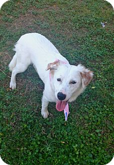 Shepherd (Unknown Type) Mix Dog for adoption in Corpus Christi, Texas - Blanca