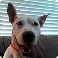 Adopt A Pet :: Sookie - Justin, TX