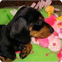 Adopt A Pet :: Cherrie - Bryan, TX
