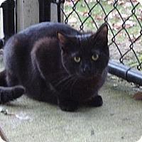 Adopt A Pet :: Shania - Kingston, WA