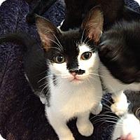 Adopt A Pet :: Renny - Monroe, NC