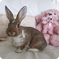 Adopt A Pet :: Mocha - Warwick, NY
