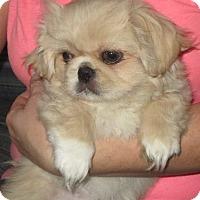 Adopt A Pet :: Buffy - Salem, NH