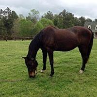Adopt A Pet :: Belle - Mouth Of Wilson, VA