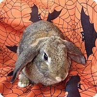 Adopt A Pet :: Sonja - Paramount, CA
