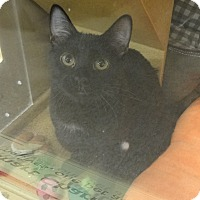 Adopt A Pet :: GARETH - Diamond Bar, CA