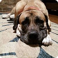 Adopt A Pet :: Arwen-VA - Virginia Beach, VA