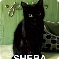 Adopt A Pet :: Sheba - Medway, MA