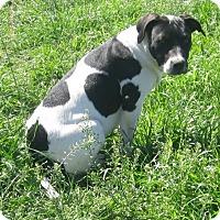 Adopt A Pet :: Apple - Copperas Cove, TX