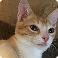 Adopt A Pet :: Junior - Lauderhill, FL