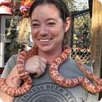 Adopt A Pet :: Dazzle - Christmas, FL
