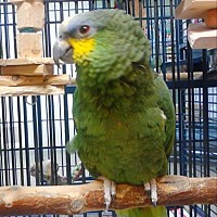 Adopt A Pet :: Miguel - Elizabeth, CO