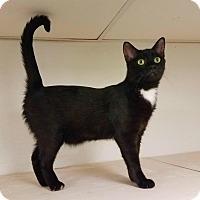 Adopt A Pet :: C-8 - Indianola, IA