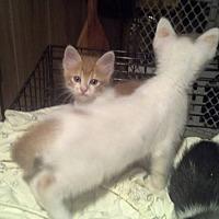 Adopt A Pet :: Dart - Whitney, TX