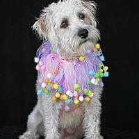 Adopt A Pet :: Sookie - SAN PEDRO, CA
