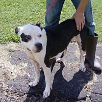 Adopt A Pet :: Bizzy - Marianna, FL
