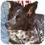 Photo 1 - Border Collie/German Shepherd Dog Mix Dog for adoption in Stephentown, New York - Misty