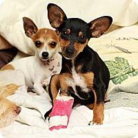 Adopt A Pet :: Lei - Honolulu, HI
