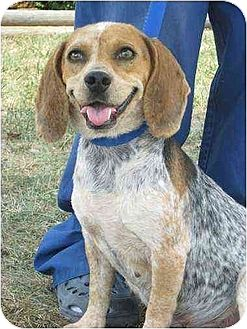 Beagle Dog for adoption in Brookside, New Jersey - Mimi