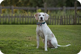 Pointer/Coonhound (Unknown Type) Mix Dog for adoption in Drumbo, Ontario - Cameron