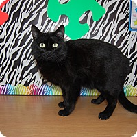 Domestic Shorthair Cat for adoption in North Judson, Indiana - Charcoal