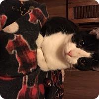 Adopt A Pet :: Lilly - Delmont, PA