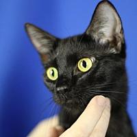 Adopt A Pet :: Sophia Loren - Winston-Salem, NC