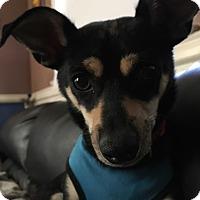 Adopt A Pet :: Mr Bean! - Tracy, CA