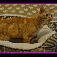 Adopt A Pet :: KittyKy - North Battleford, SK