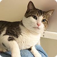 Adopt A Pet :: Freud - Salisbury, MA