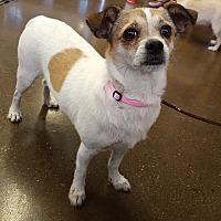 Adopt A Pet :: Rikki - Scottsdale, AZ