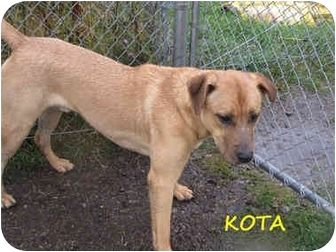 Labrador Retriever Mix Dog for adoption in Hayden, Idaho - Kota