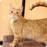 Adopt A Pet :: Tammy - Miami, FL