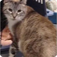 Adopt A Pet :: Sable - Wenatchee, WA