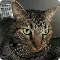 Adopt A Pet :: Zed - Gilbert, AZ