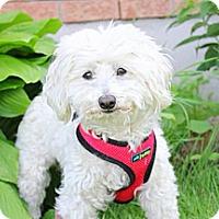 Adopt A Pet :: Daisy - Douglas, ON