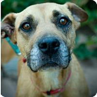 Adopt A Pet :: Georgia - Sacramento, CA