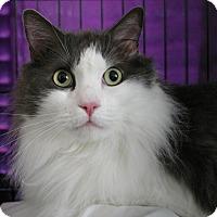 Adopt A Pet :: Momo - Sacramento, CA