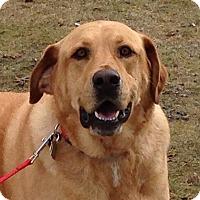 Adopt A Pet :: Duke Urgent - Windham, NH