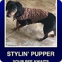 Adopt A Pet :: Baxter - Morrisville, PA