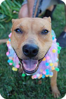 Terrier (Unknown Type, Medium) Mix Dog for adoption in Minot, North Dakota - Hope