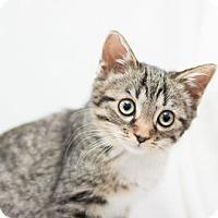 Adopt A Pet :: Ann - Fountain Hills, AZ